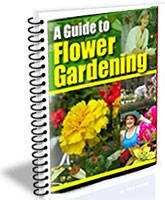 A Guide to Flower Gardening